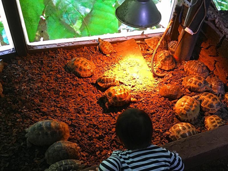 iZooで亀を眺める1歳児