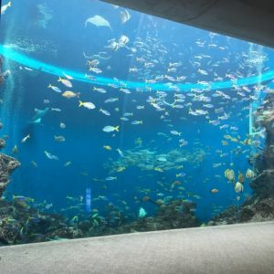 鴨川シーワールドの大水槽